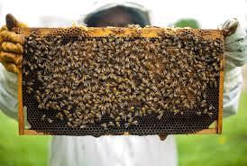 Raam vol bijen